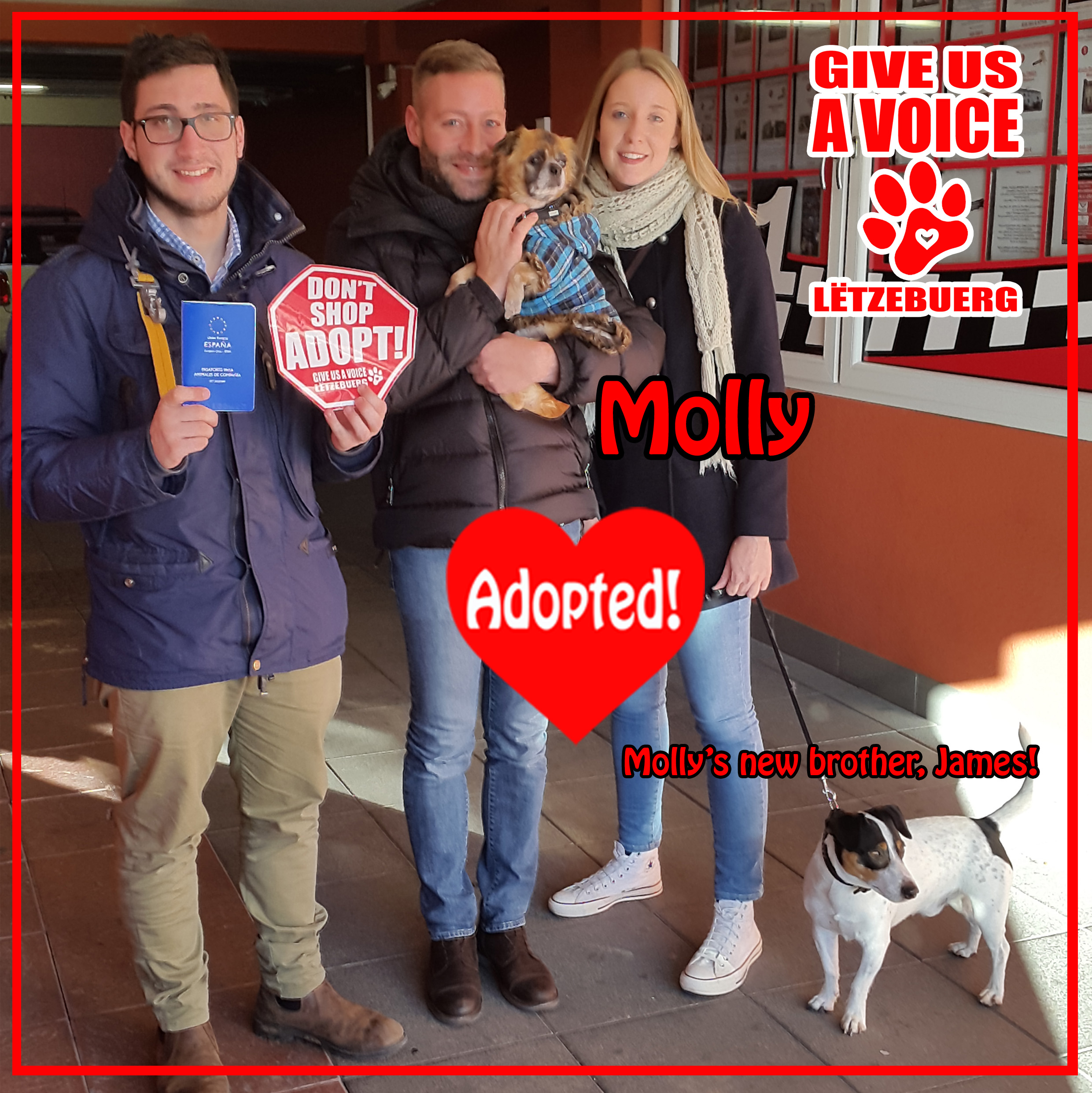 molly-adopted-copy