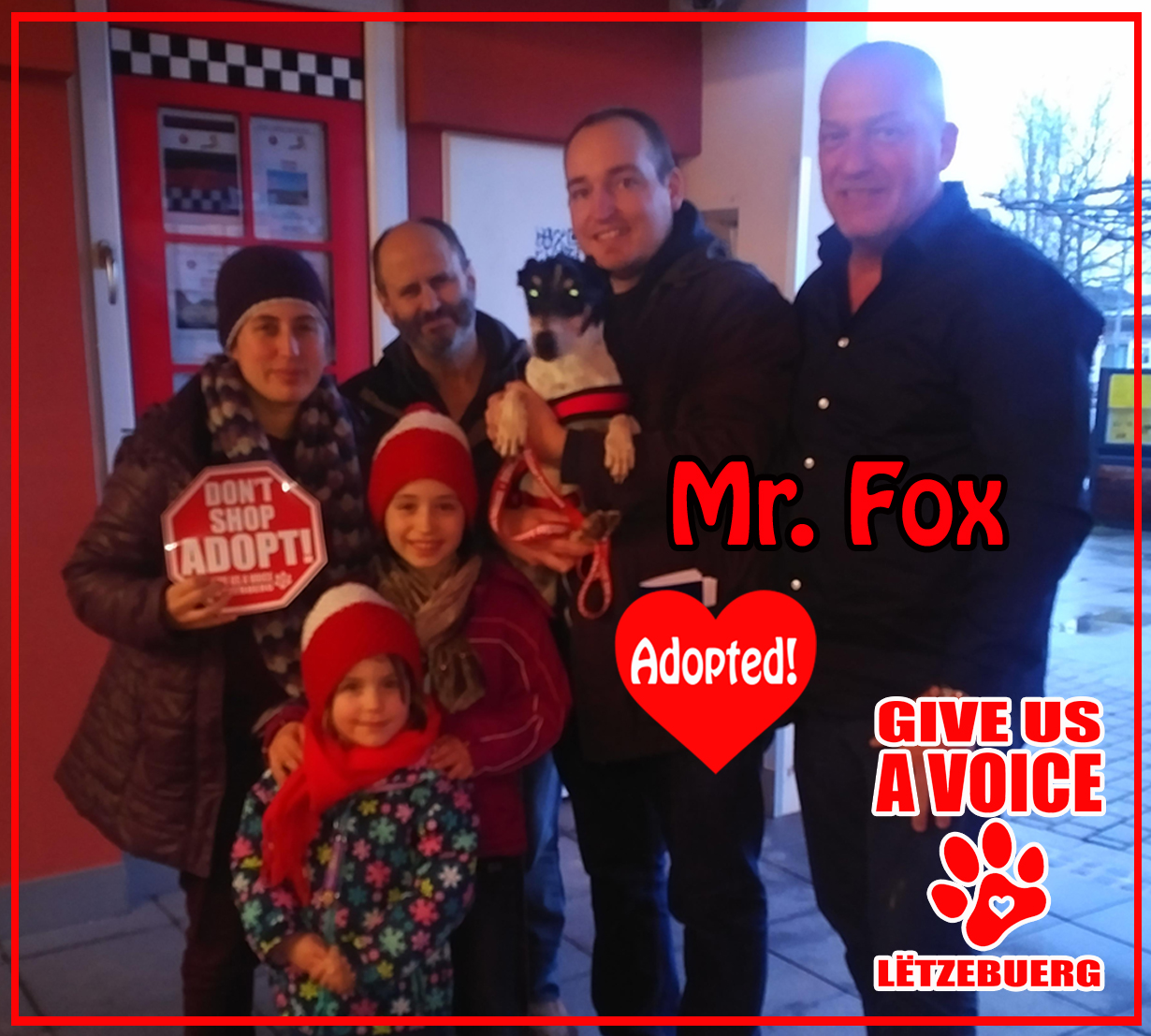 Mr. Fox Adopted! copy