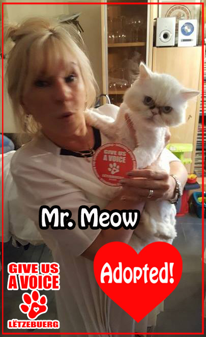 Mr. Meow Adopted! copy