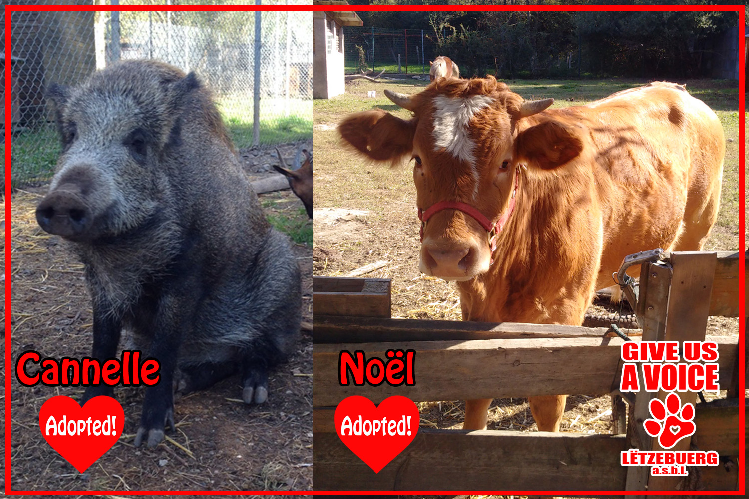 Noel and Cannelle Adopted