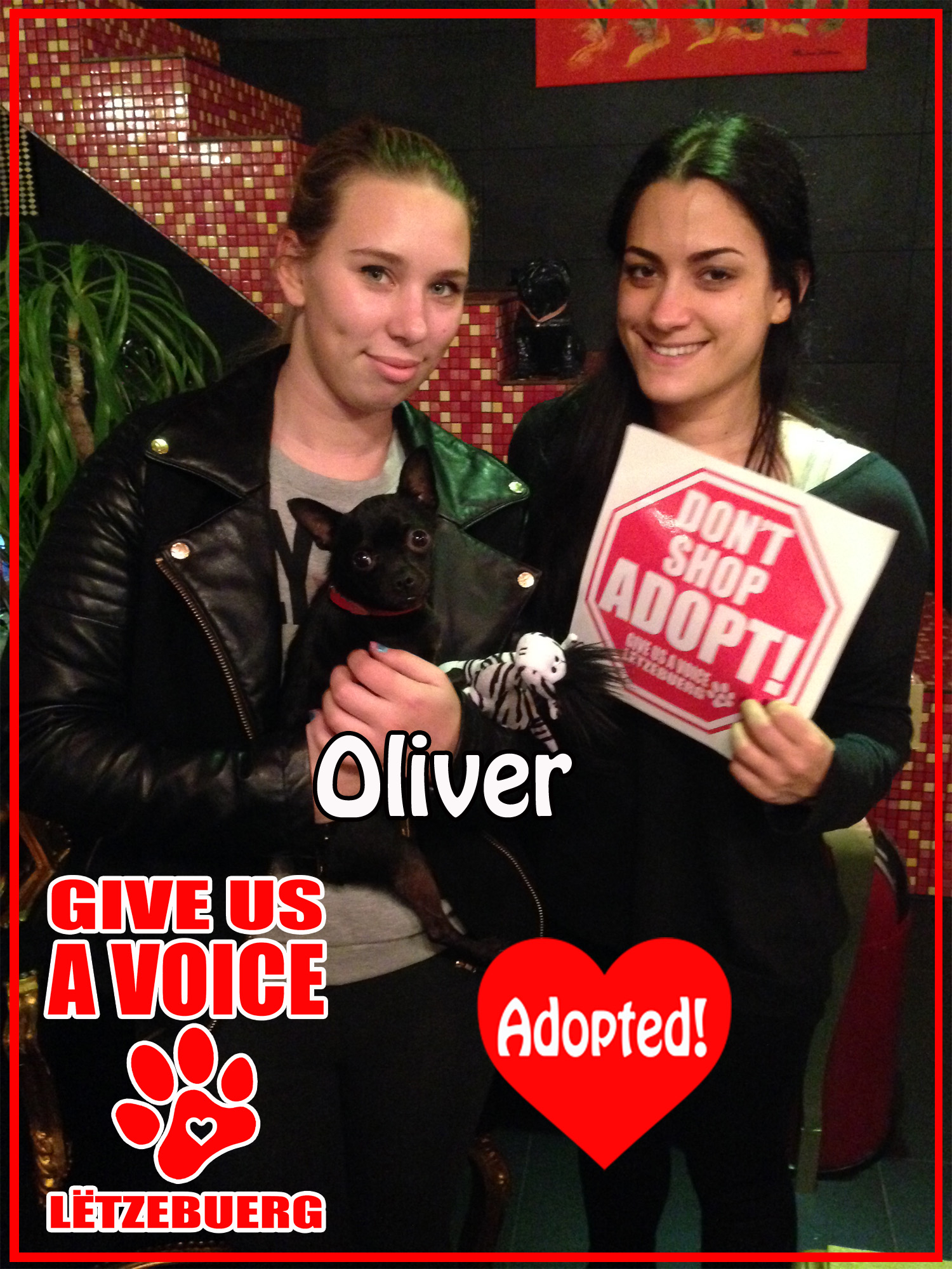Oliver Adopted! copy