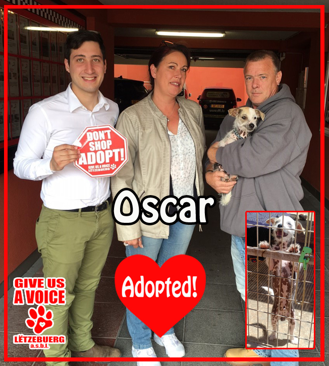 Oscar adopted! copy