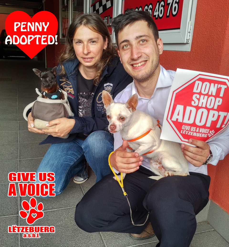 Penny adopted copy