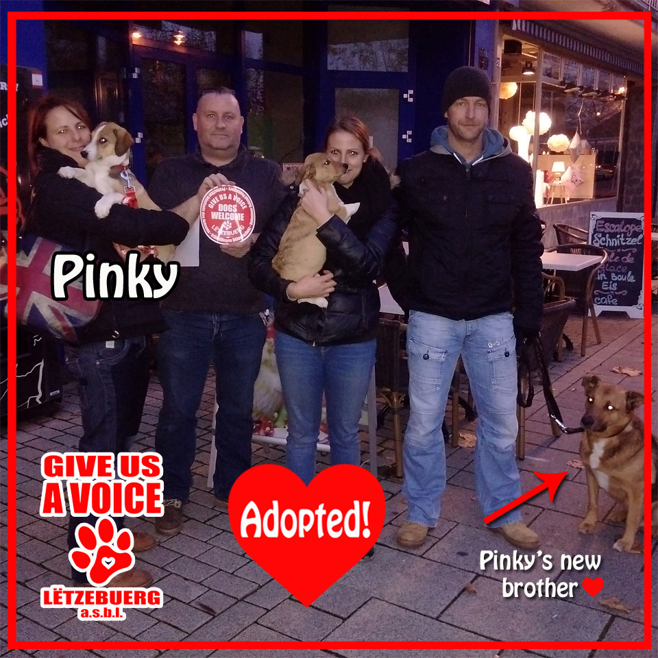 Pinky's adopted! copy