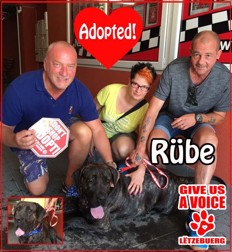 Rübe Adopted! copy