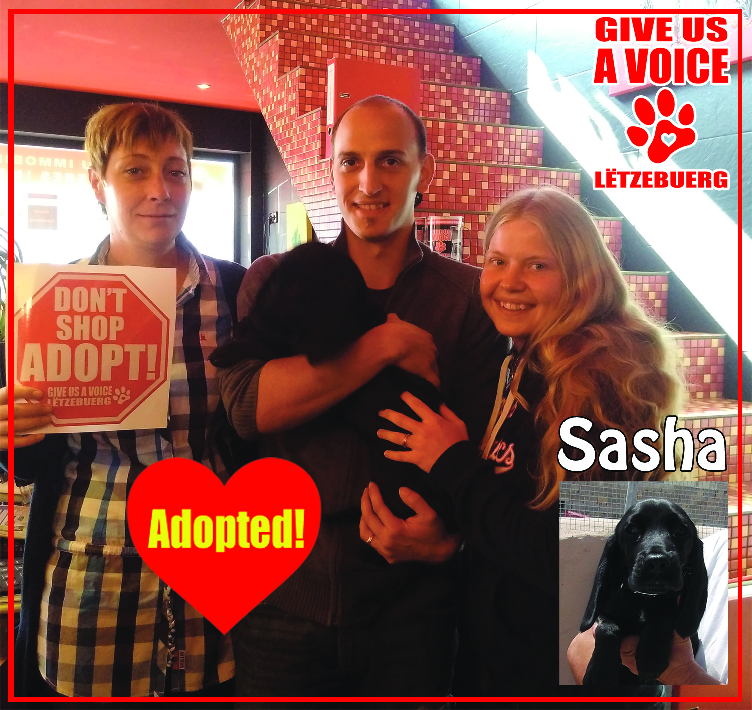 Sasha Adopted copy