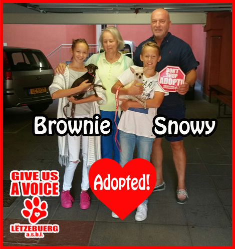 snowy-and-brownie-adopted-copy