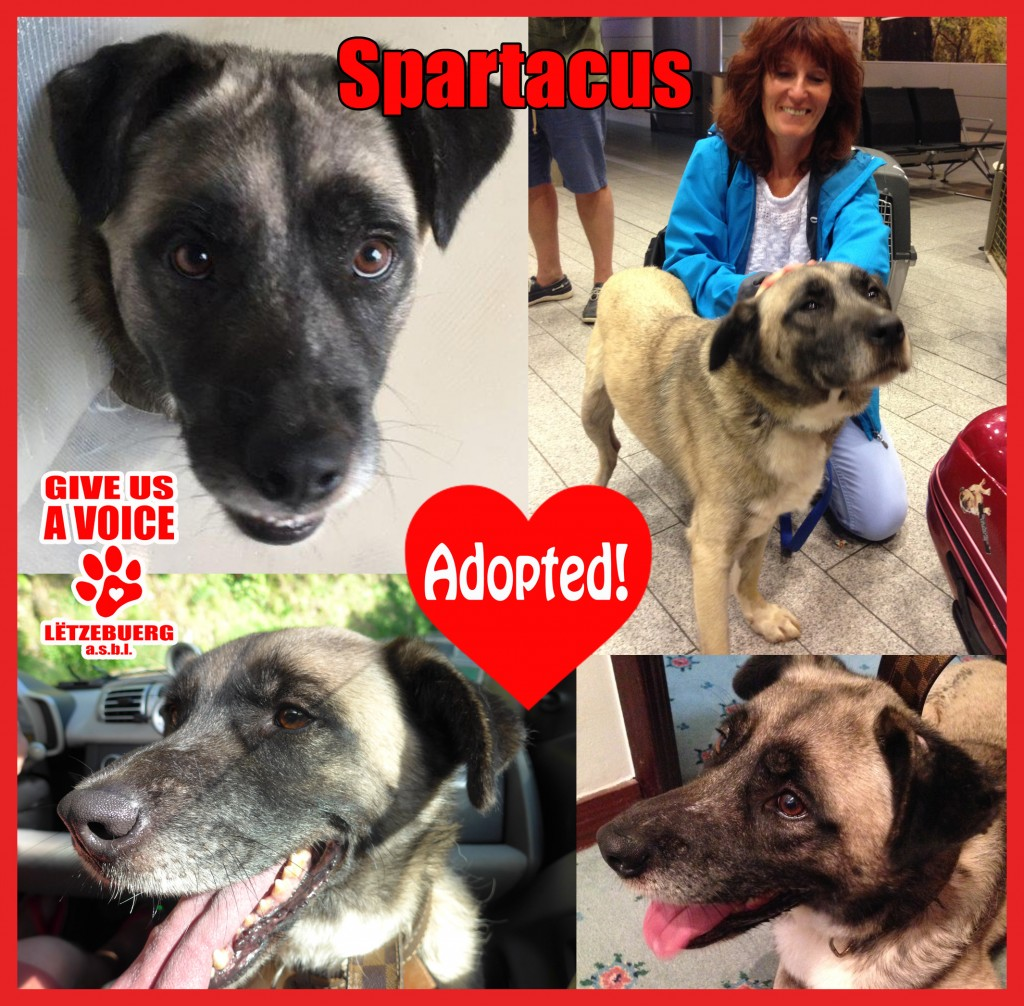 Spartacus Adopted copy