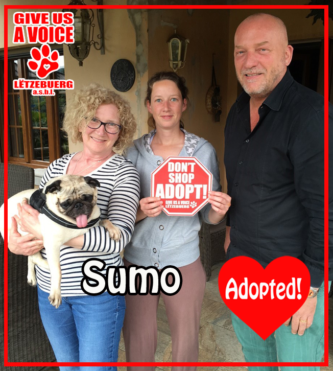 Sumo adopted! copy