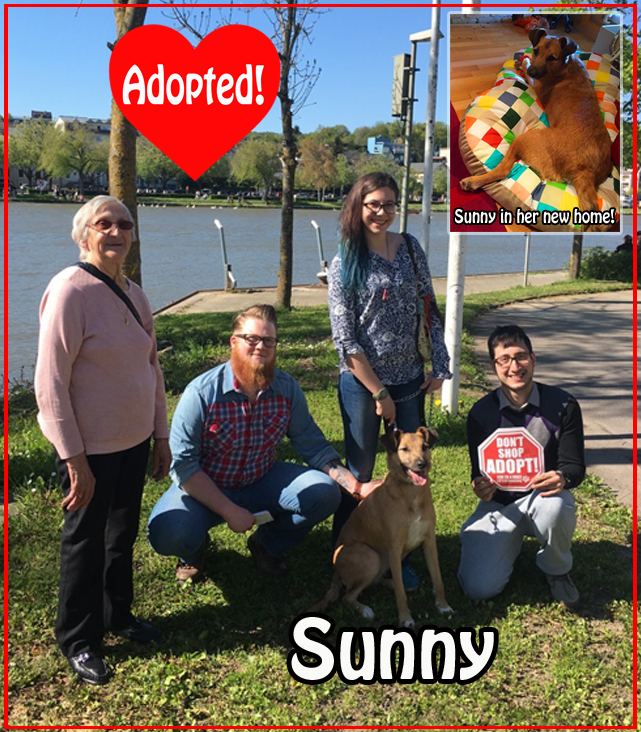 Sunny adopted! copy