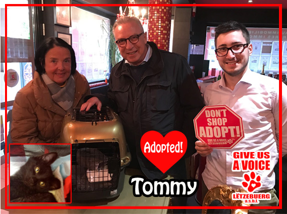 tommy-adopted-copy