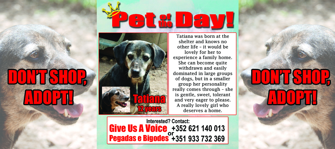 01-04-16 Pet of the Day for website