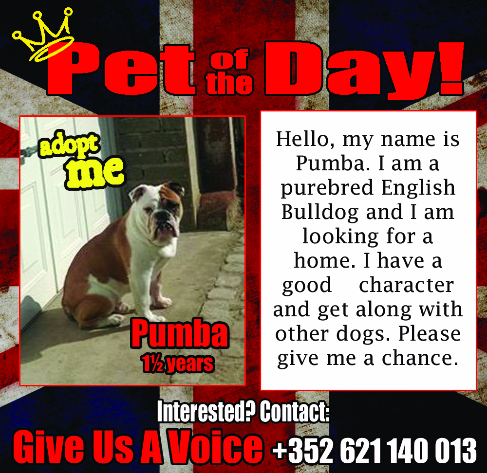 01-30-16 Pet of the Day