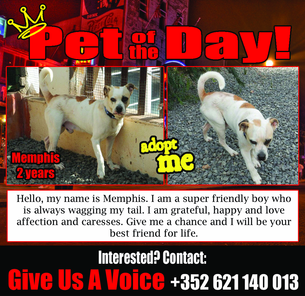 02-05-16 Pet of the Day