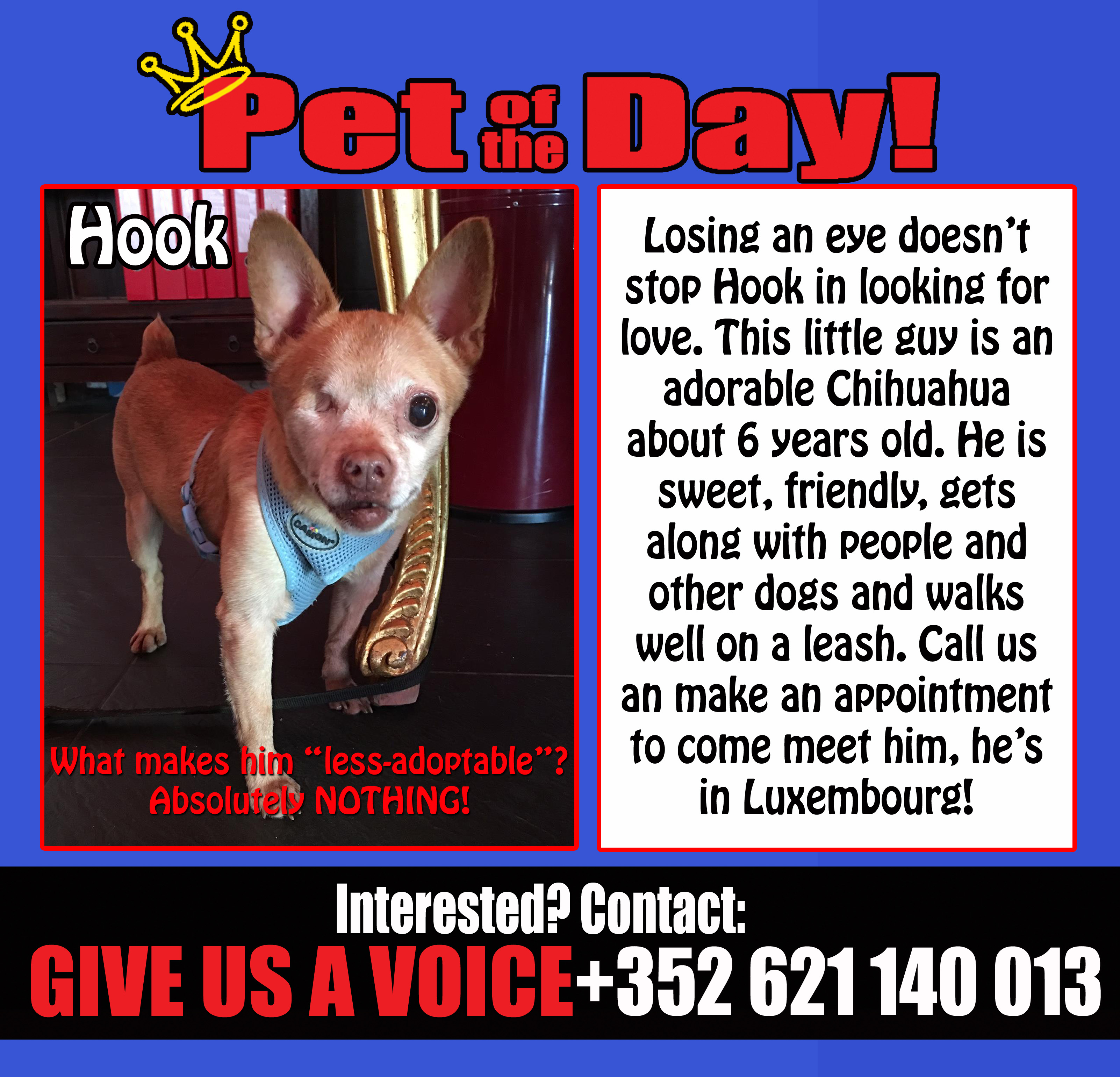 02-06-15 Pet of the Day