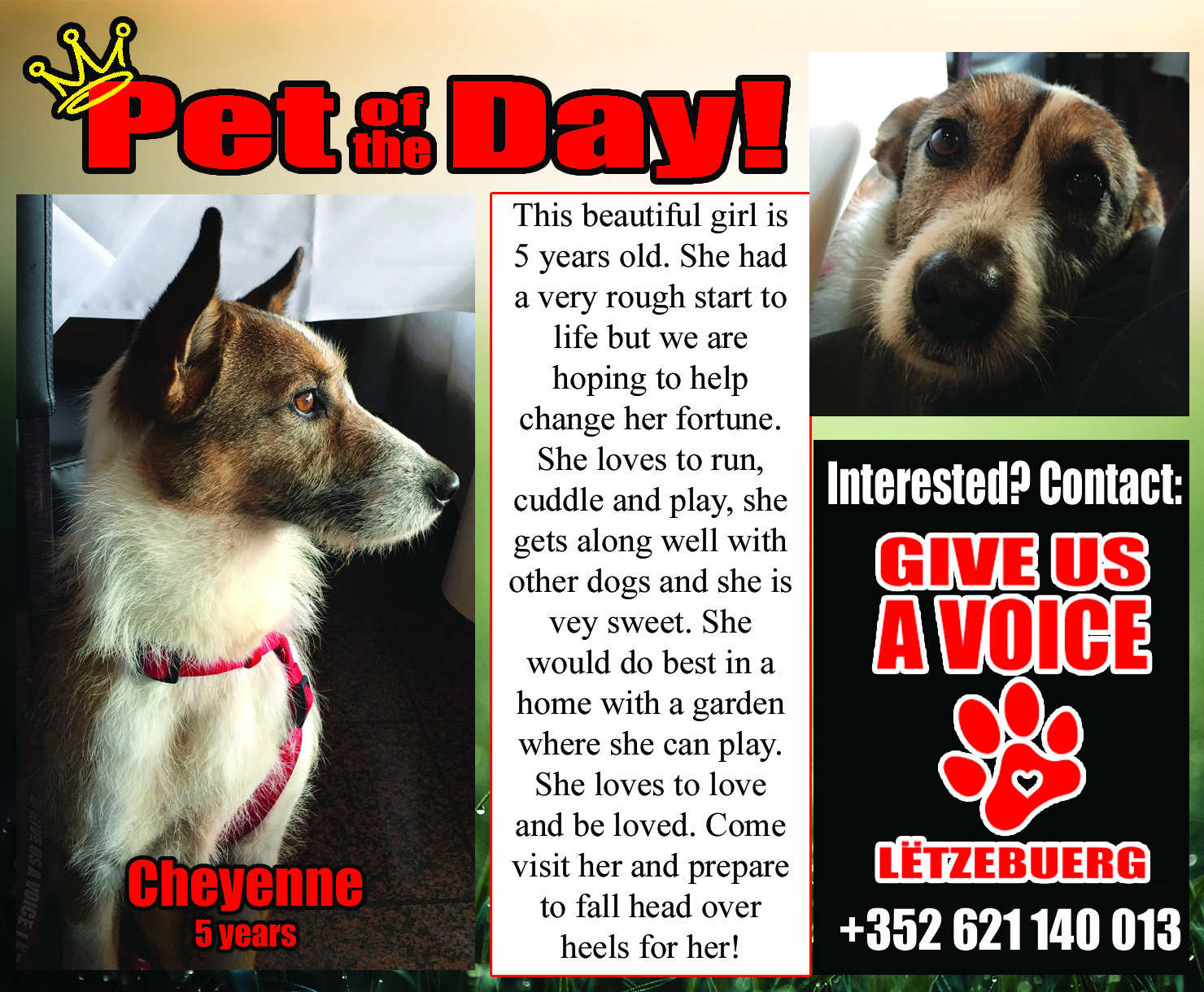 03-09-16 Pet of the Day