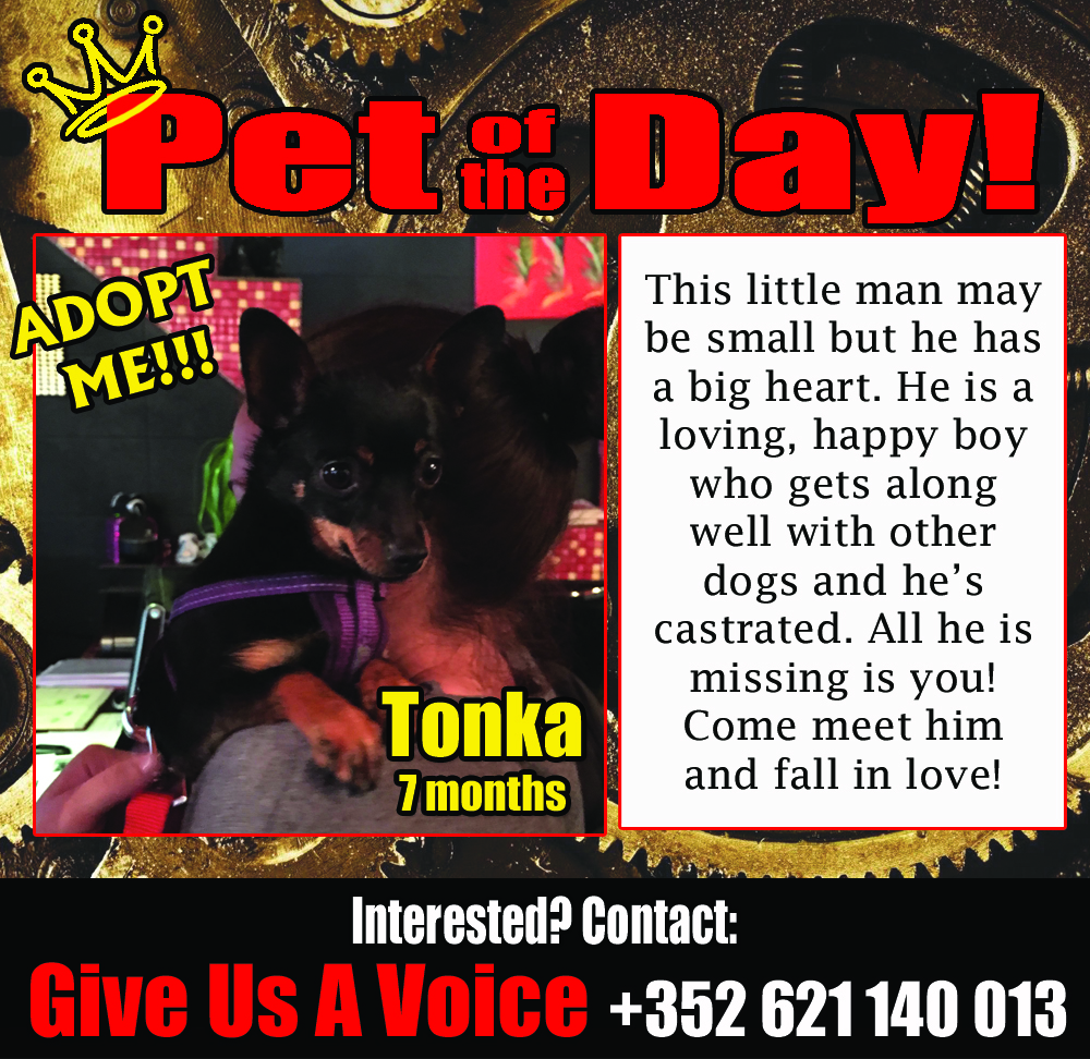 04-01-16 Pet of the Day copy