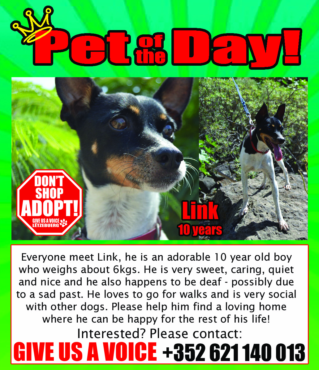 04-07-16 Pet of the Day