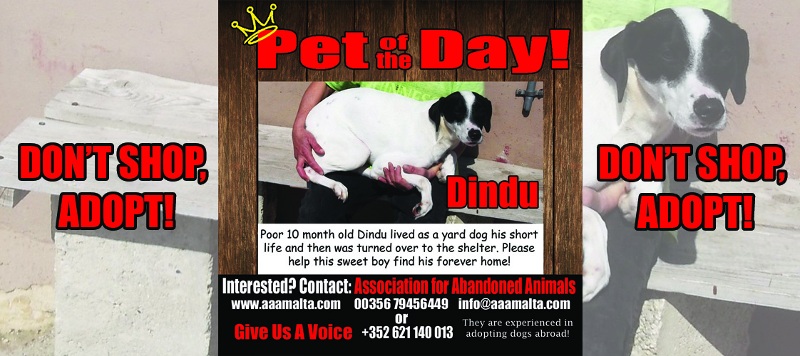 05-07-15 Pet of the Day for website