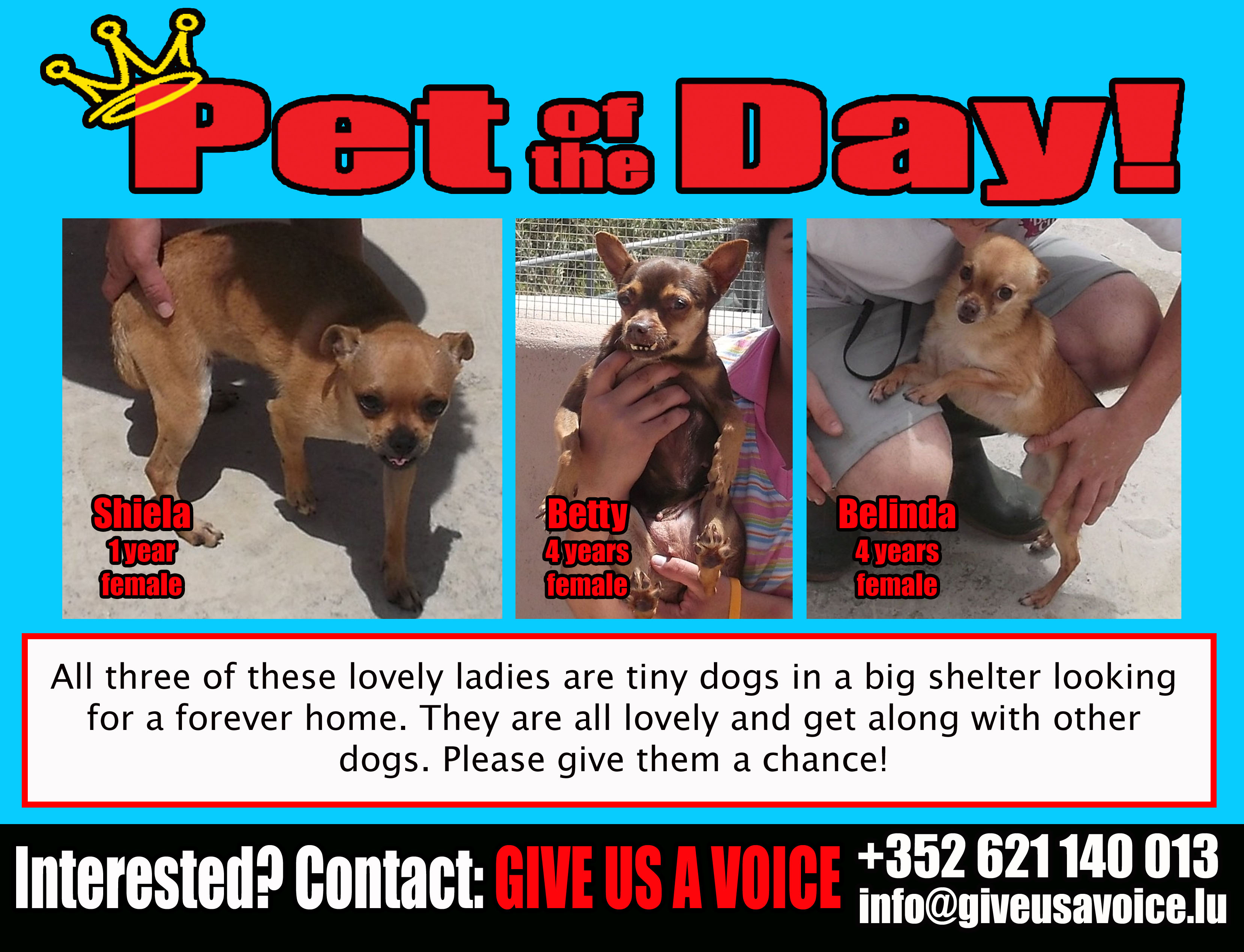 06-07-16 Pet of the Day