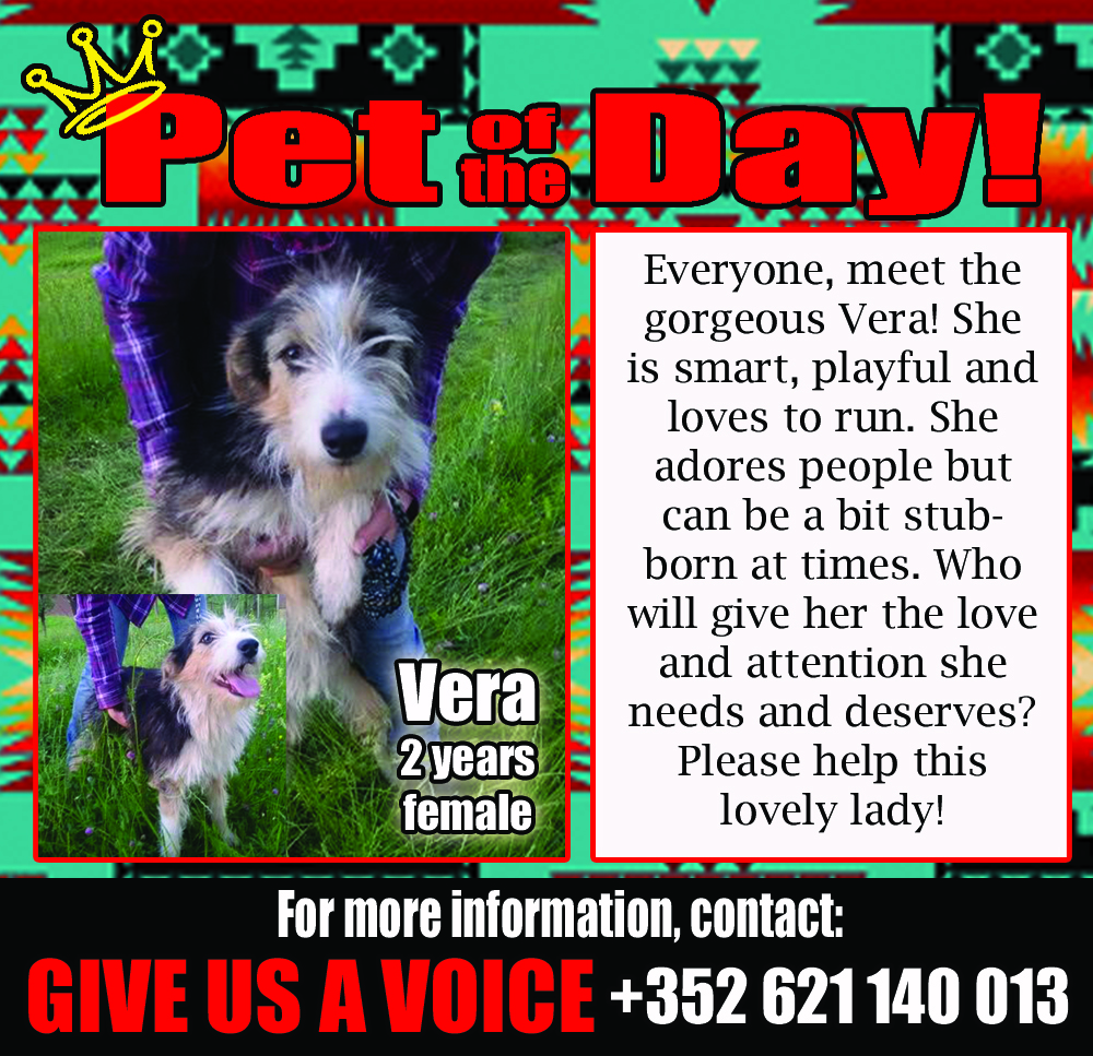 06-13-16 Pet of the Day Vera