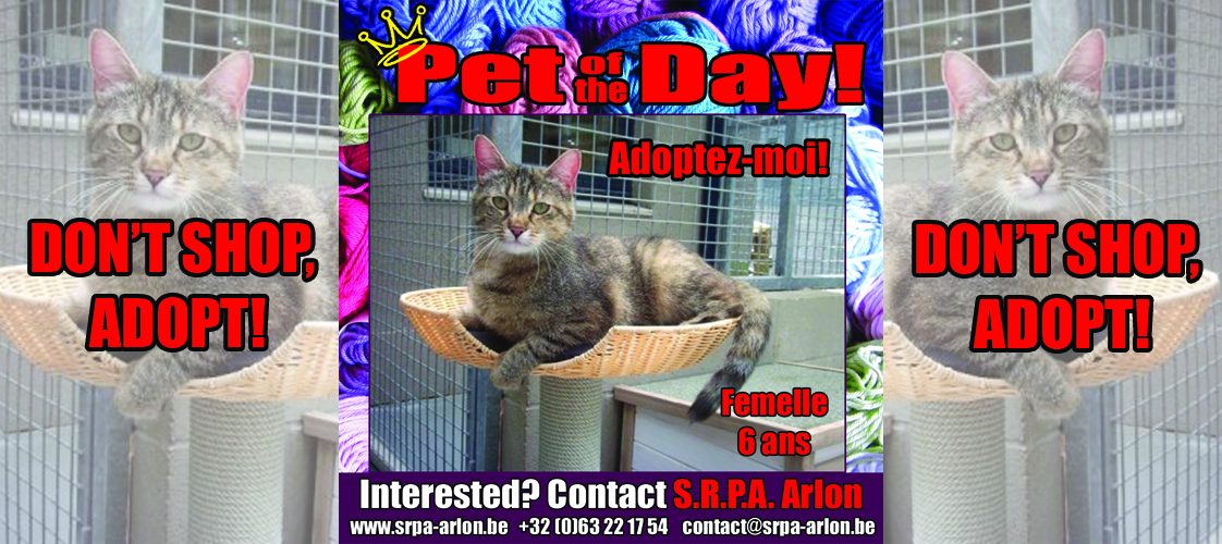 06-16-15 Pet of the Day for website