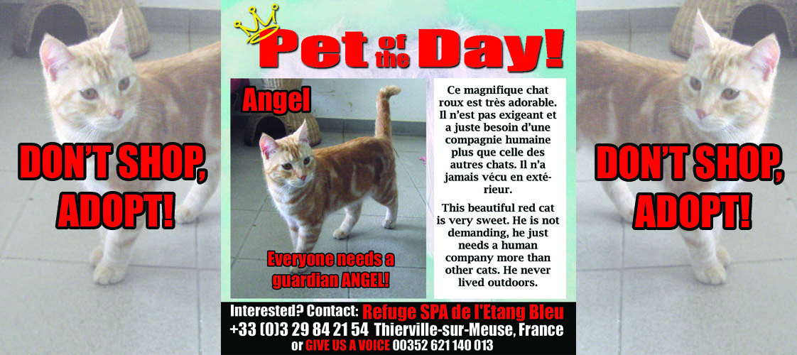 07-01-15 Pet of the Day for website