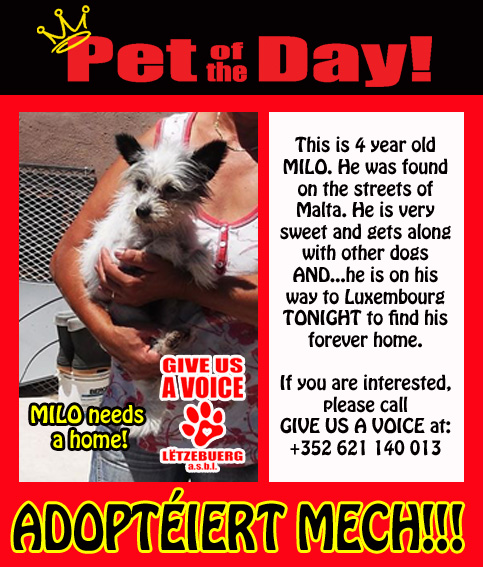 08-12-15 Pet of the Day