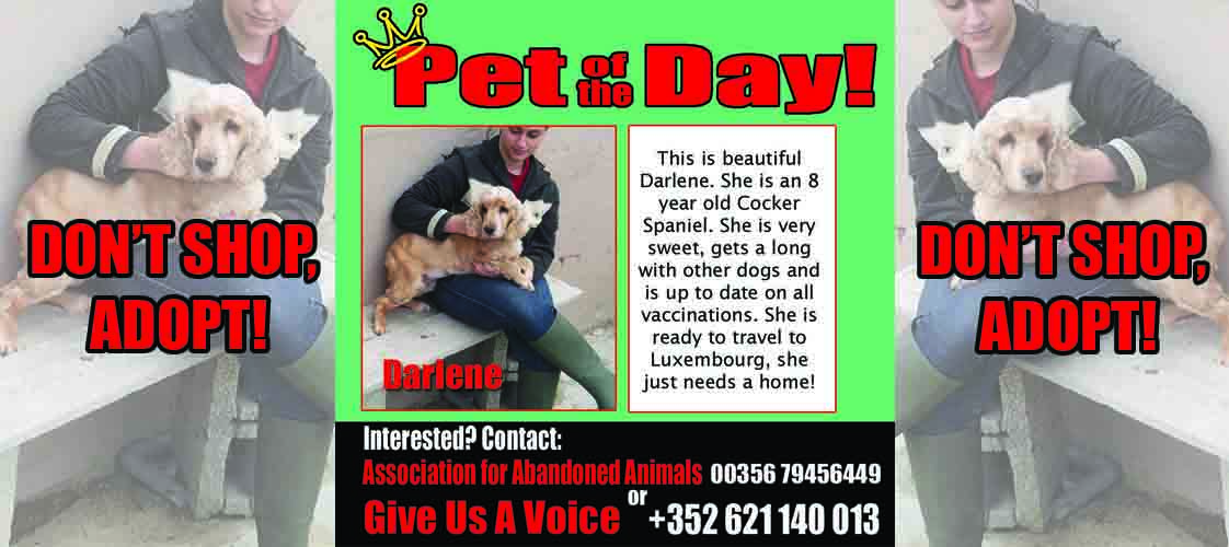 08-21-15 Pet of the Day for website