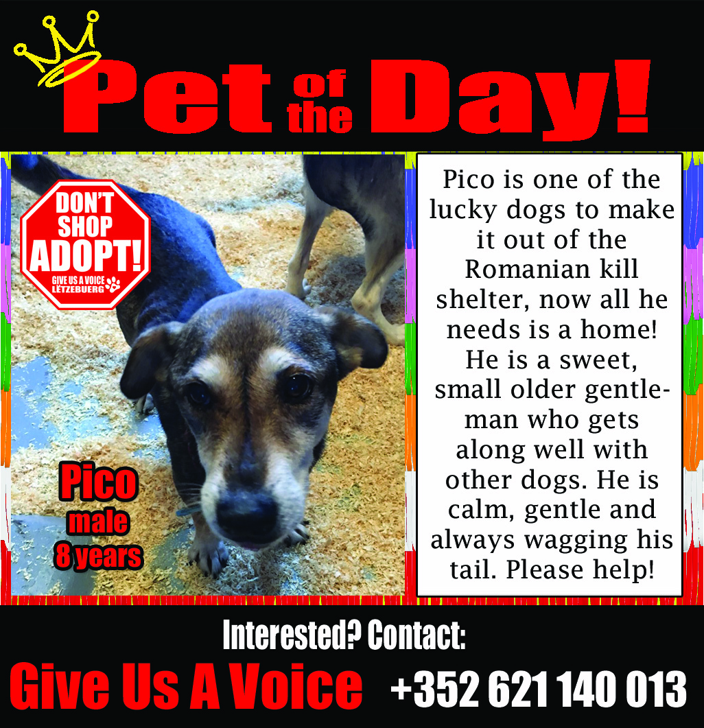 08-26-16 Pet of the Day