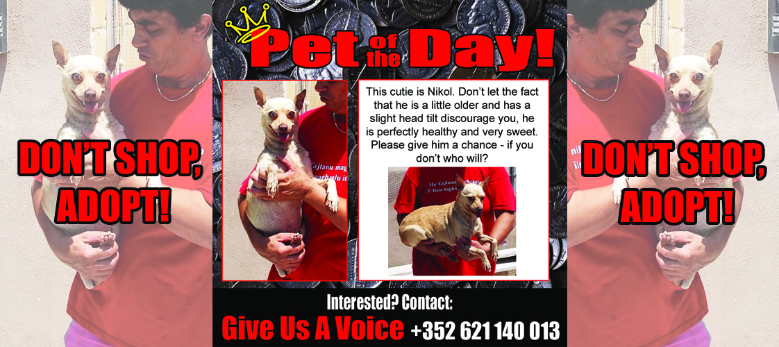 09-25-15 Pet of the Day for website