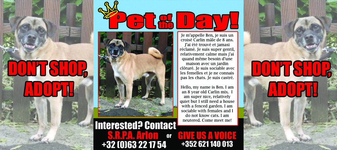 10-22-15 Pet of the Day for website
