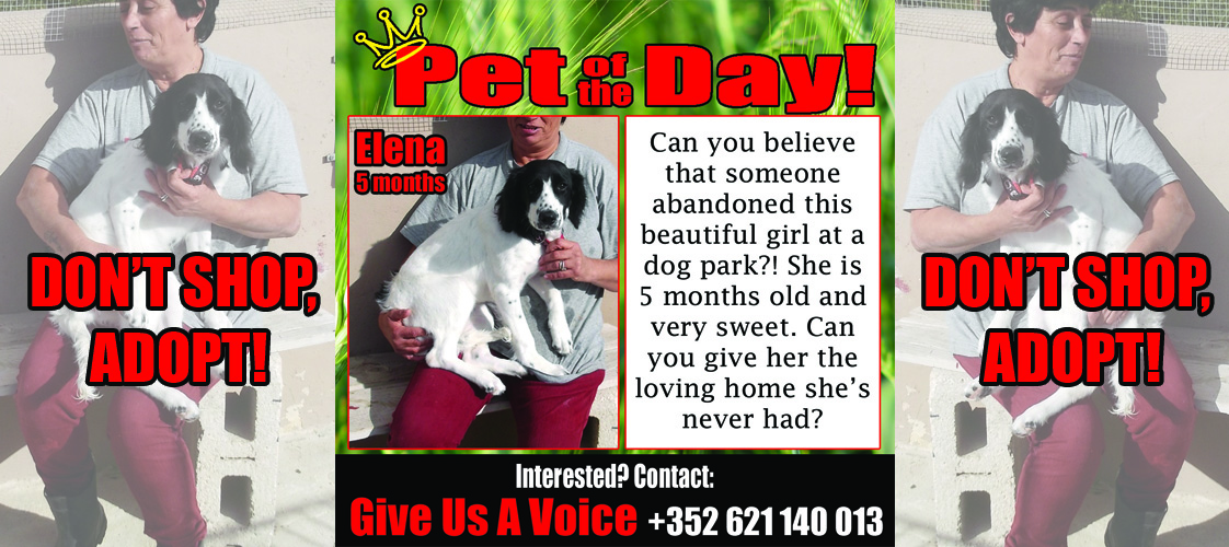 12-11-15 Pet of the Day for website