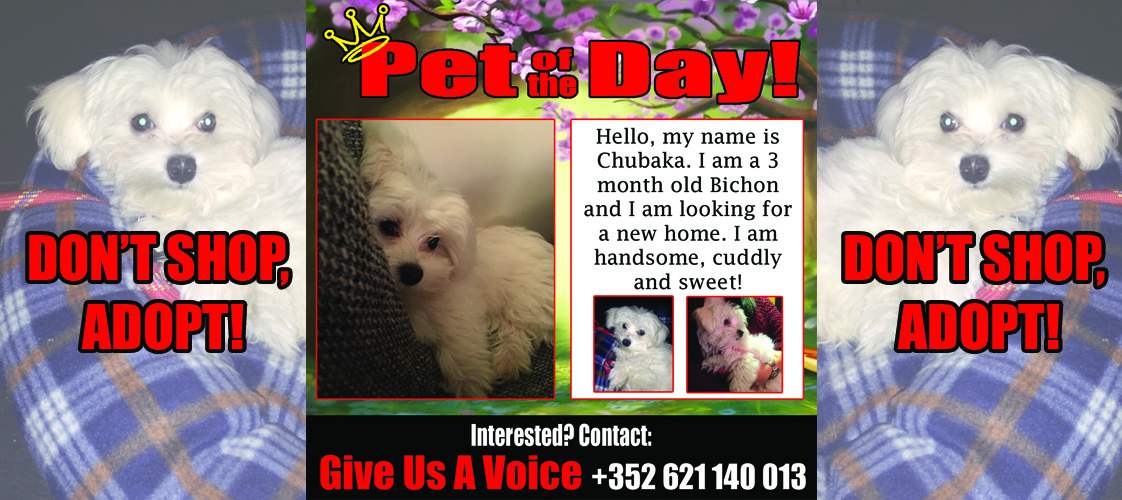 12-15-15 Pet of the Day for website