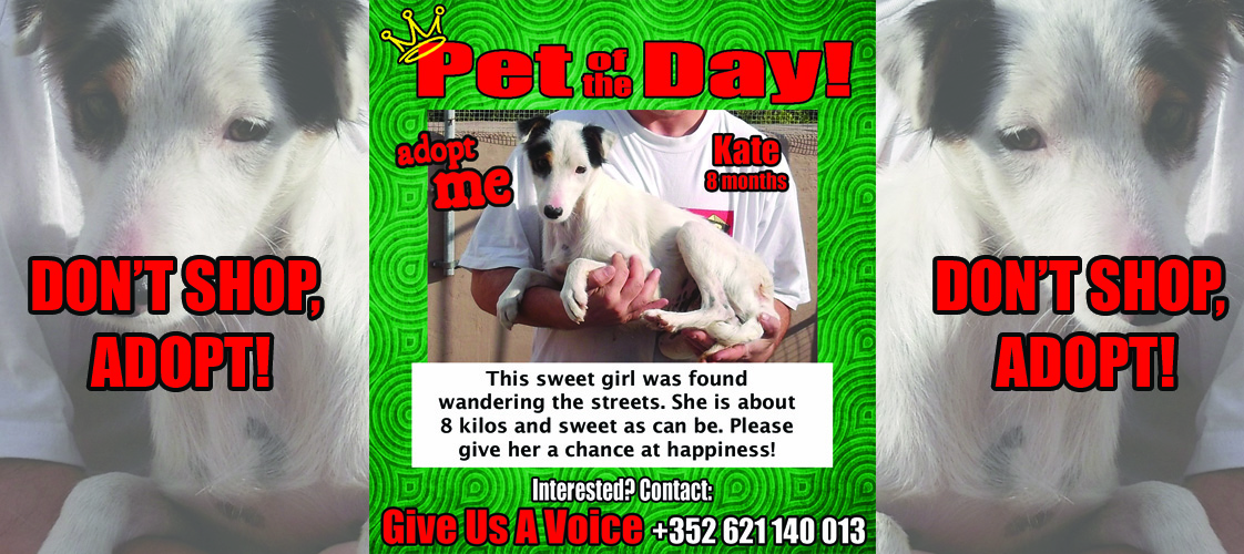 12-23-15 Pet of the Day for website