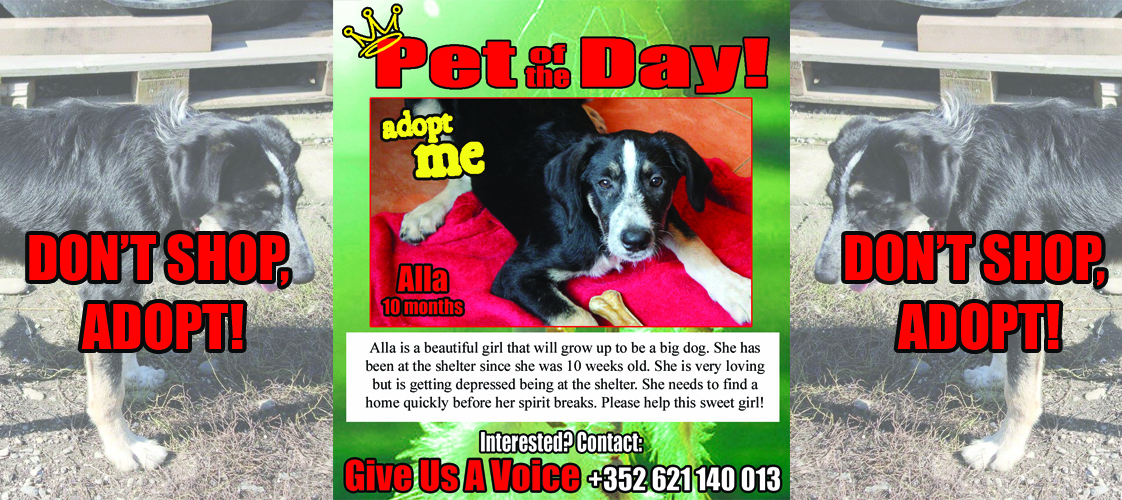 12-26-15 Pet of the Day for website