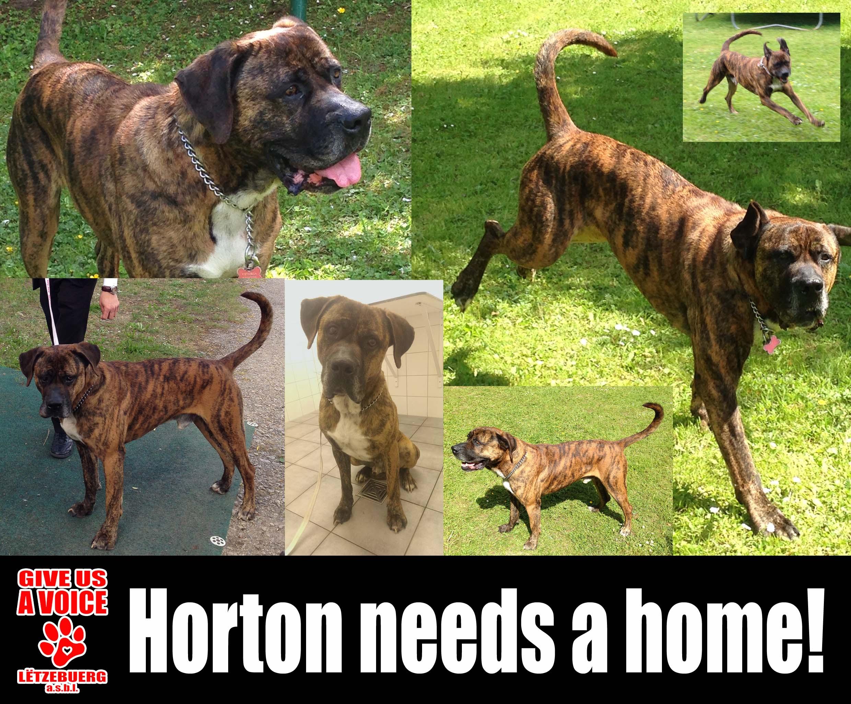 Adopt Horton! copy