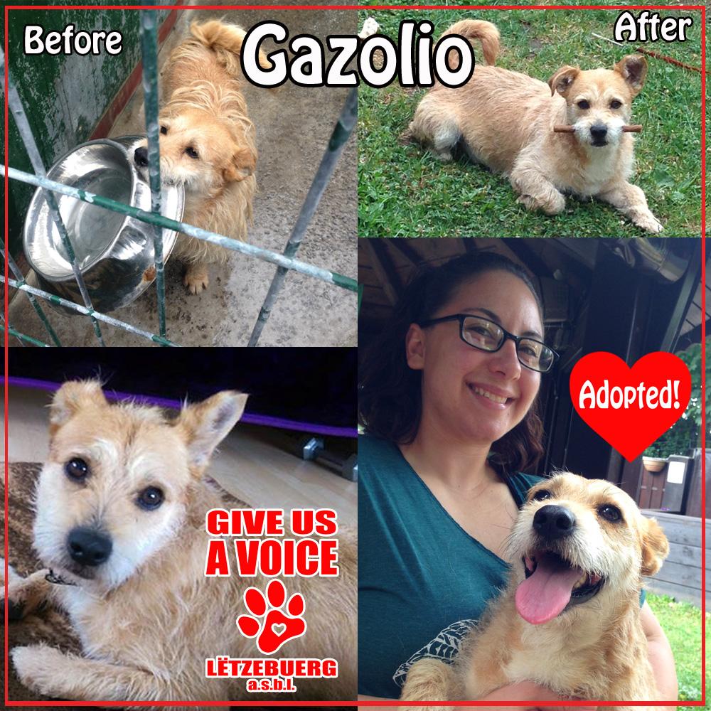Gazolio Adopted copy