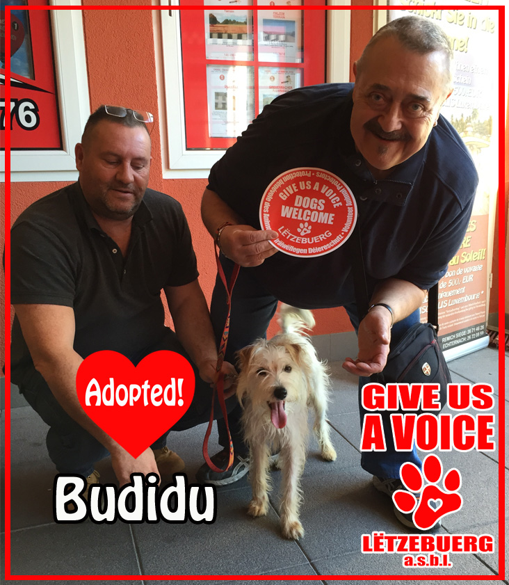 Budidu Adopted copy
