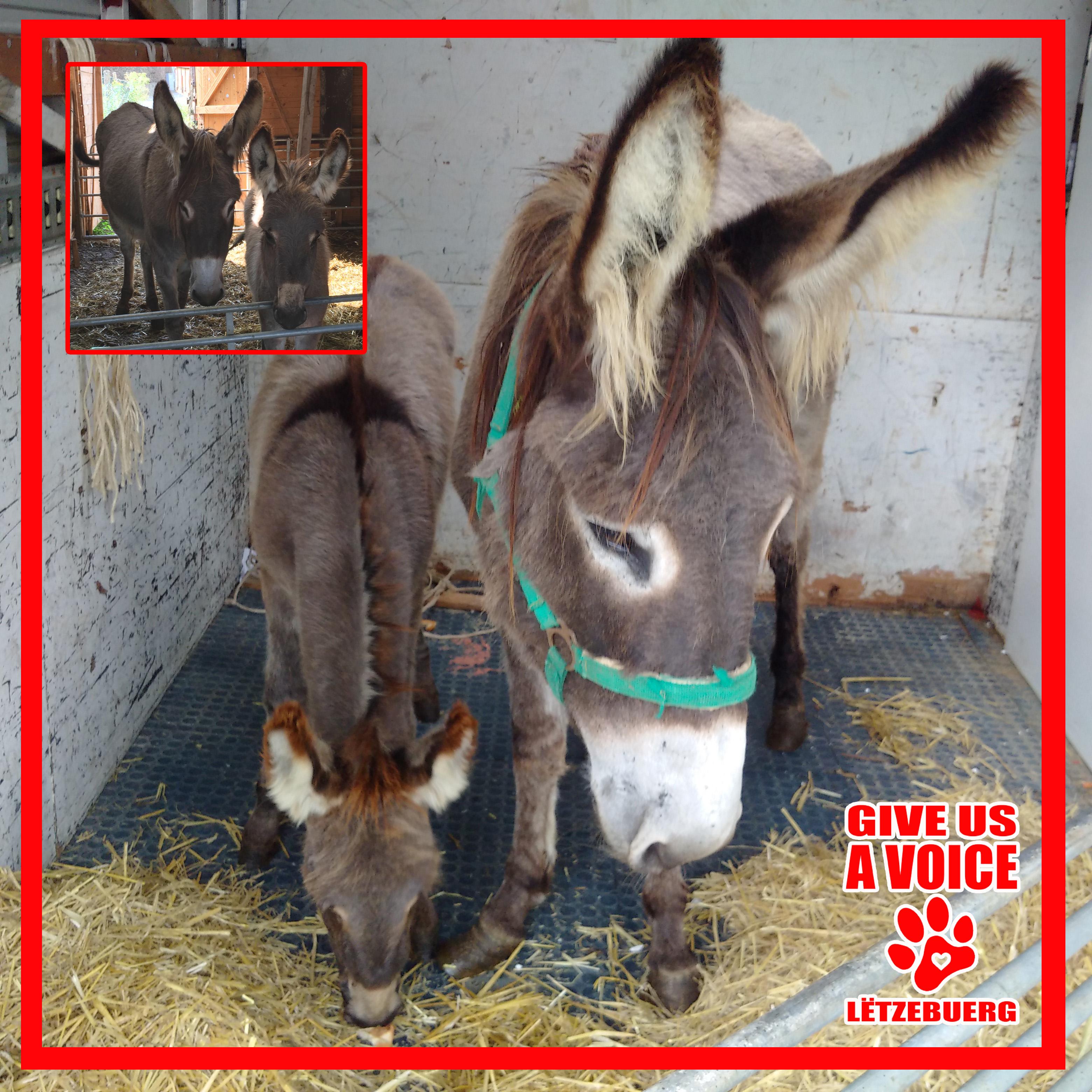 Donkeys Saved copy