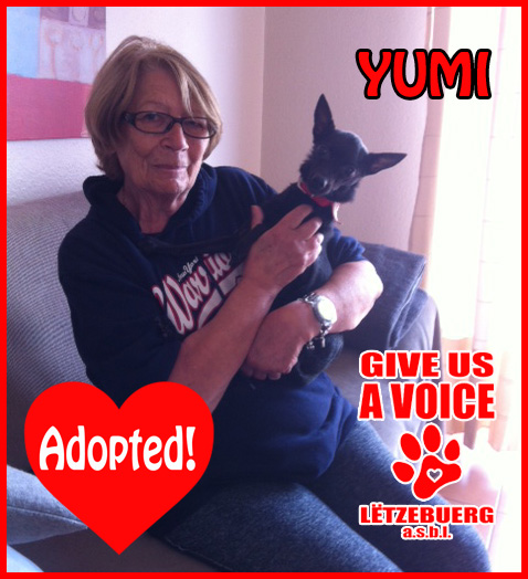 Yumi Adopted copy