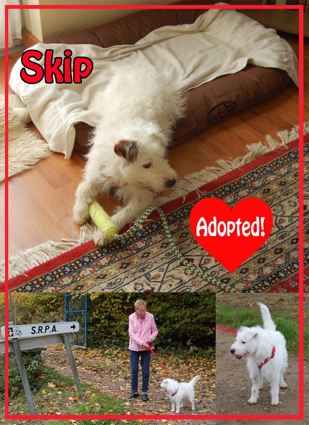 Skip Adopted copy