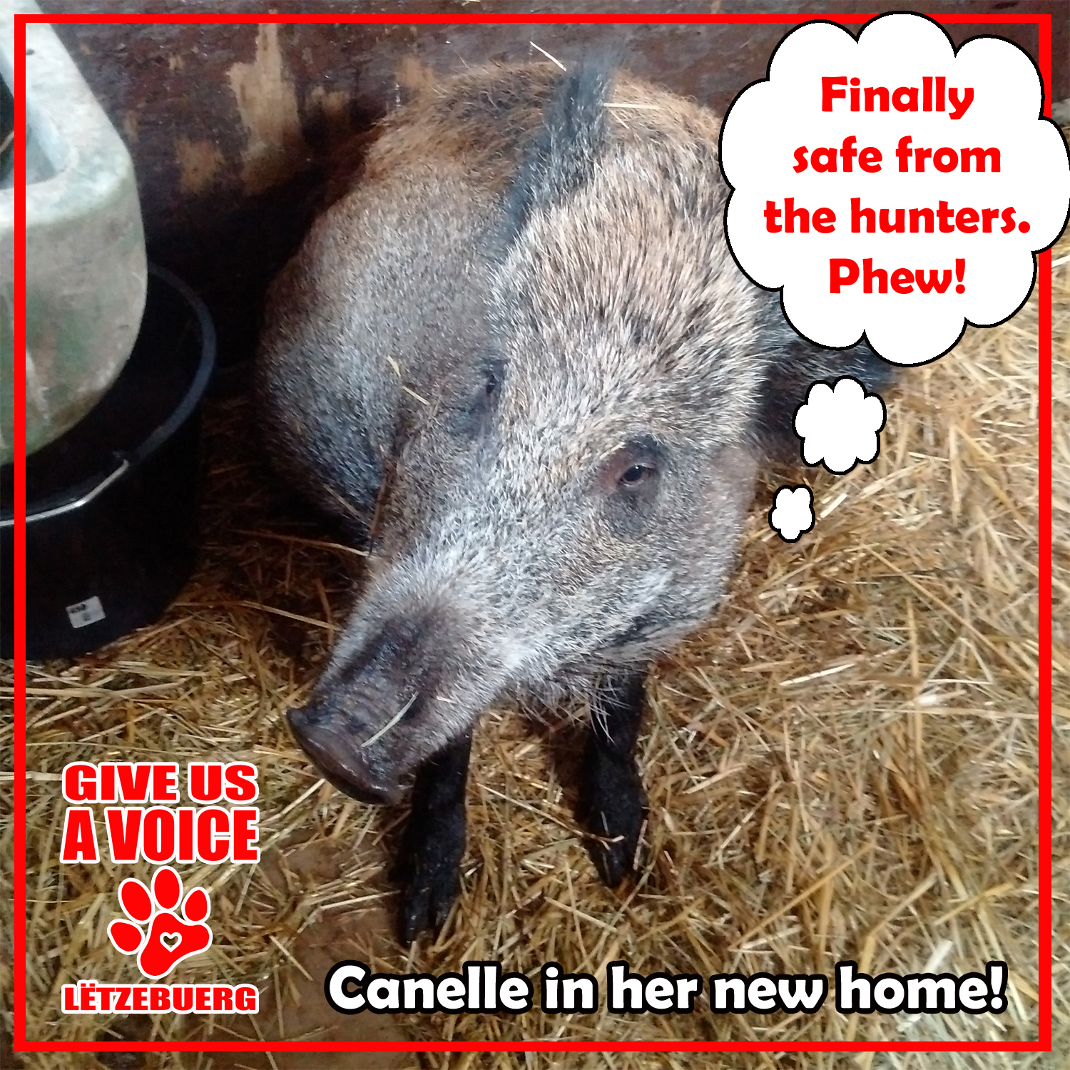 Canelle in her new home copy