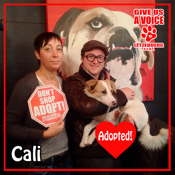 Cali Adopted copy