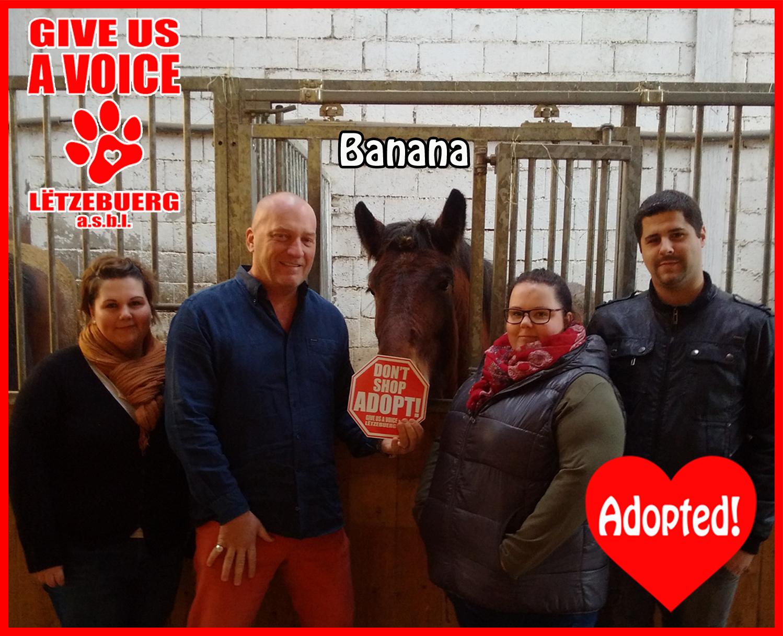 Banana Adopted! copy