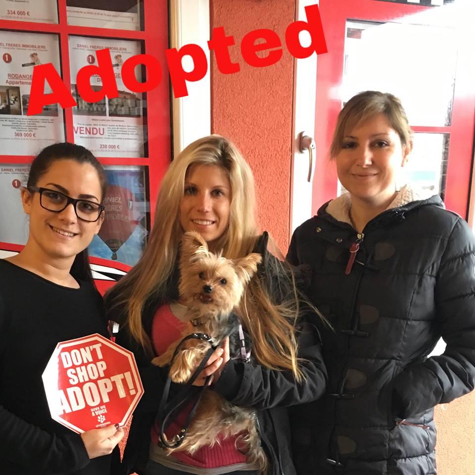 Bandit adopted!