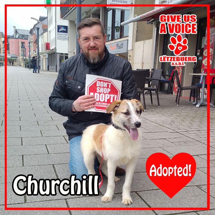 Churchill Adopted! copy
