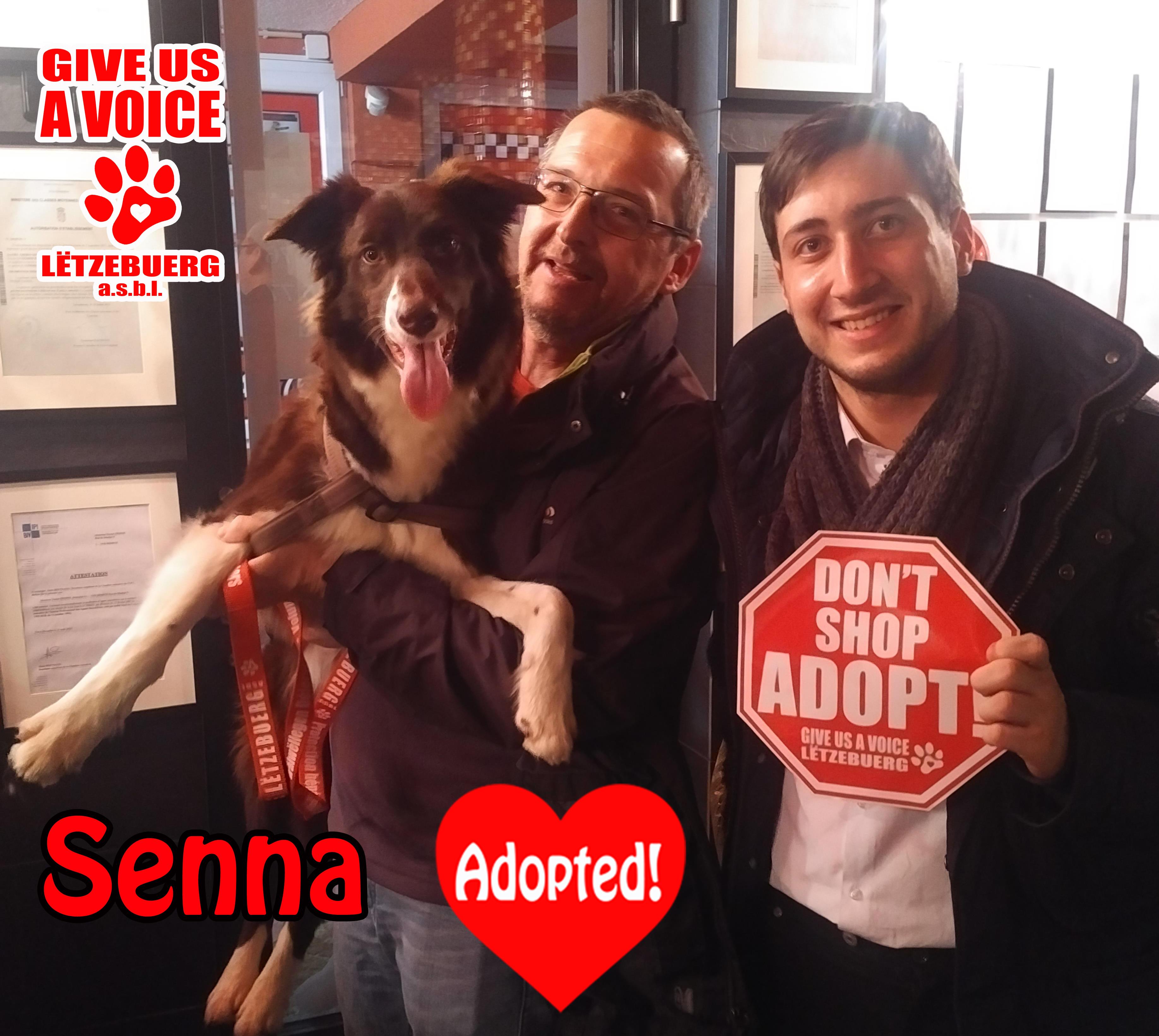 Senna Adopted! copy