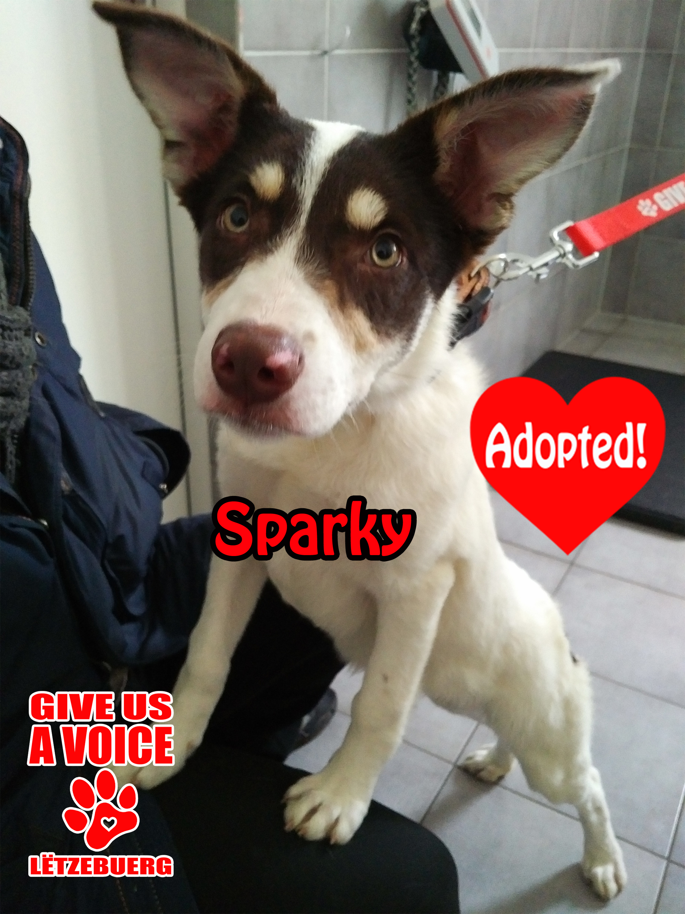 Sparky Adopted! copy
