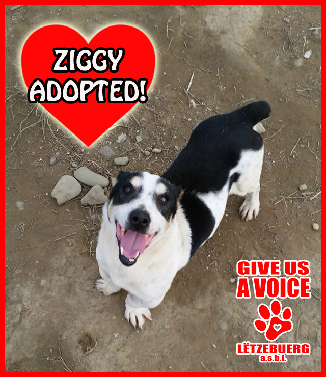 Ziggy Adopted! copy
